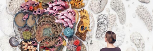 艺术家考特尼 · 马蒂森墙壁上的海底珊瑚作品