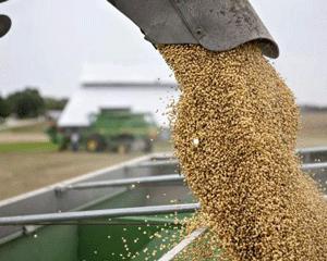 中国加快采购巴西大豆,提振豆价走高