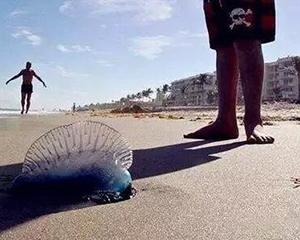 通知公告|提醒近期赴宋卡府、苏梅岛中国游客警惕剧毒水母