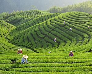 茶文化生态农业园开发项目