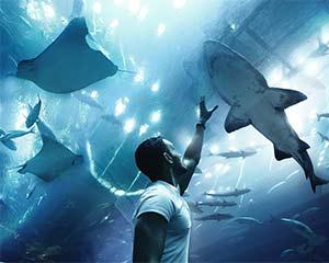 荷兰回收鲨机器人公司希望与投资者洽谈中国市场开发