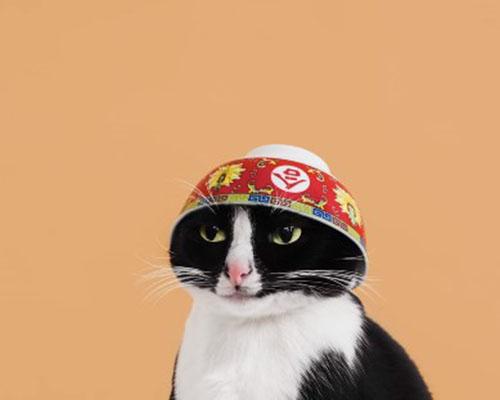 每一只网红猫背后都有一个想红的人