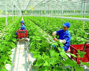 老挝代表团莅临中鹤考察调研现代农业发展模式