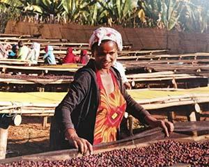 公益+商业的新探索:购买一袋埃塞俄比亚咖啡捐赠一元给当地咖农