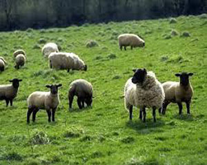 我国首批哈萨克斯坦进口羊肉运抵新区综保区